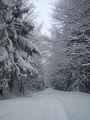 зима...красив сезон ; comments:16