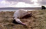 Птиците умират сами ; Коментари:5