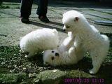 Кученца ; comments:9