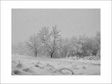 Снегът вали... ; comments:45