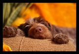 Спящата красавица ; comments:13