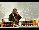 Масло, мед и горски плодове... ; comments:55