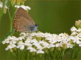 Пеперуда ; comments:26