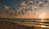 птиците III ; comments:52