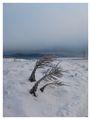 Зимна рапсодия в синьо ; comments:35