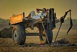 All inclusive (Pushkar, India) ; comments:119