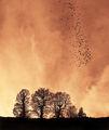 Дървета,птици, няма жици ; comments:44