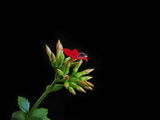 Твоята любов ме напоява... ; comments:43