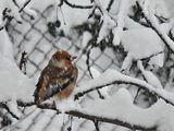 Черешарка през зимата ; comments:73