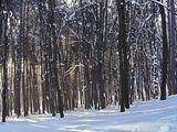 Утро в снежната гора ; comments:29