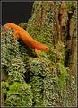 Оранжев дракон ; comments:25