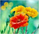 Цветни мечти ; comments:23