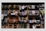Португалски цветове ; comments:129