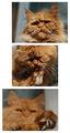 Малки котешки портретии ; comments:14