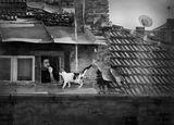 Каралсон който живее на покривите ; comments:81