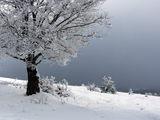 снежно дърво ; comments:6