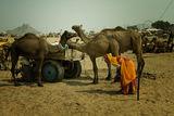 Camel Fair, Pushkar, India ; comments:28