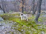 Макс на мартенска разходка... ; comments:9