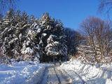 Зимно и снежно ; comments:67