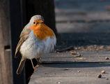 Robin's bridge. ; comments:48