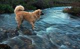 Бари и реката ; comments:21