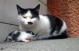 Ева стана майка ;)) ; comments:16