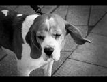 Amores Perros ; Comments:11