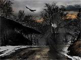 Black  raven ; comments:42