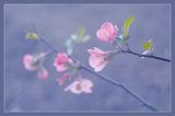 Пролетно ; comments:35