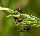 Пролет пукна, мравка хукна... ; comments:16