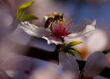 Пролет ; comments:84