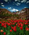 Пролет ; comments:39
