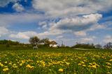 Пролетна импресия ; comments:50