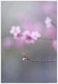 Пролет ; comments:43