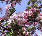 Пролет е! ; Comments:26