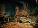 къщата на котките ; comments:66