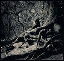 корени ; comments:24