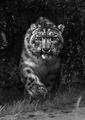 една голяма котка ; comments:8