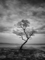 The Tree ; comments:26