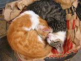 котки на кравай ; comments:6