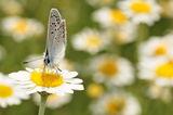 пролет:) ; comments:32