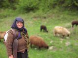 Първа зелена паша ; comments:105