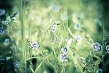 Пролетна симфония ; comments:14