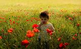 Градината на моето детство ; comments:56