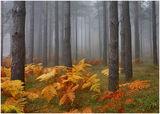 Родопска гора ; comments:58