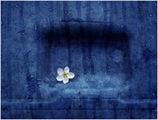 Пролетта на бидоните! ; comments:47