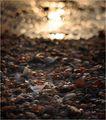 Слънчево многомидие ; comments:10