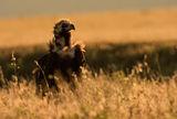 Черен лешояд на зaлeз ; comments:61