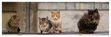 Котки ; comments:12