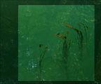 От дълбините на река Вит ; comments:30